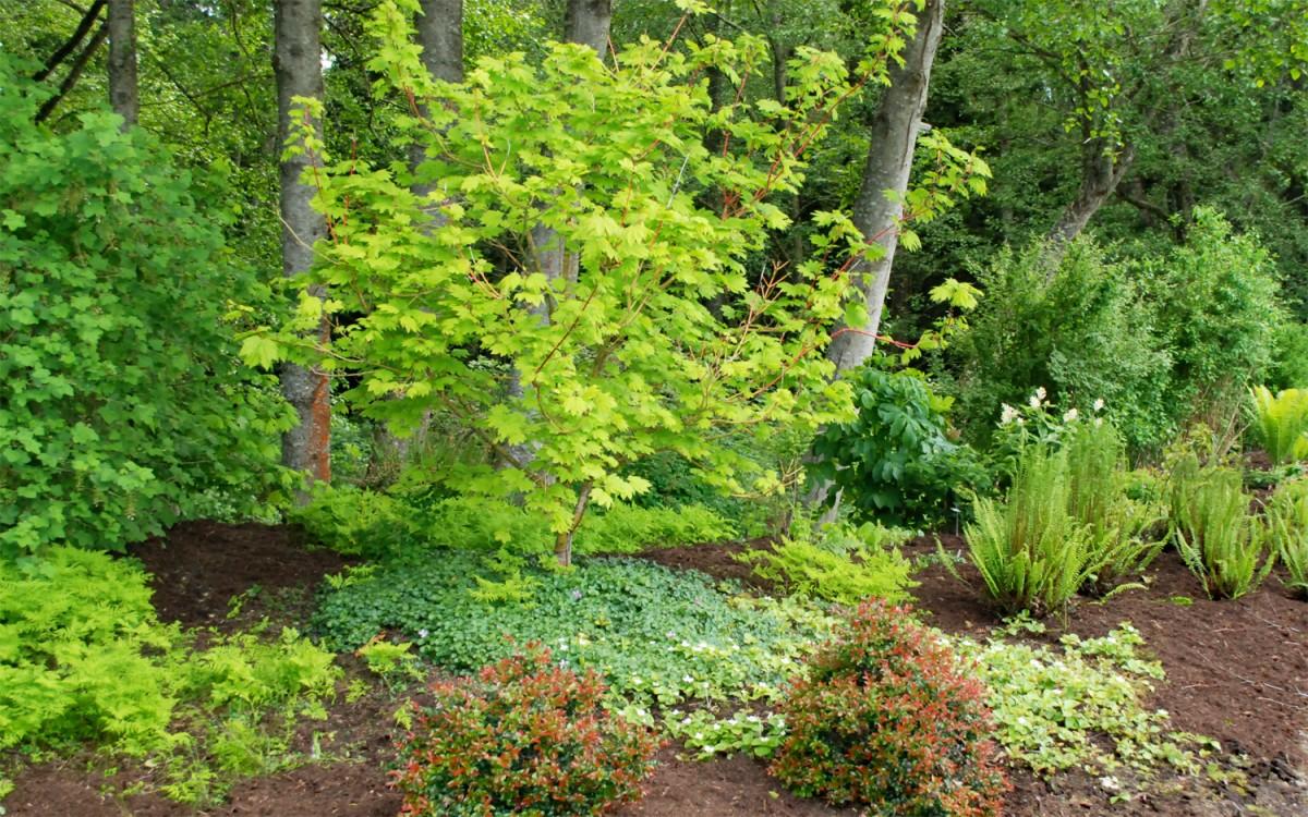 Buck lake native plant garden for Garden information sites