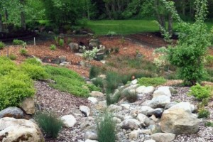 Dry or seasonal streambed in the Buck Lake Native Plant Garden