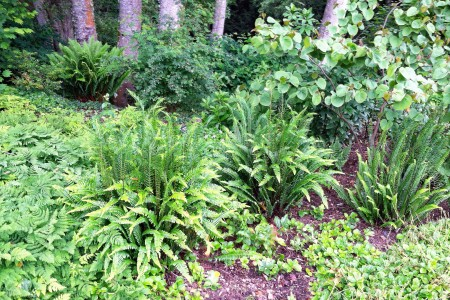 A variety of ferns are at home in the summer shade garden.