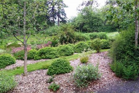 Buck Lake Native Plant Garden Rain Garden