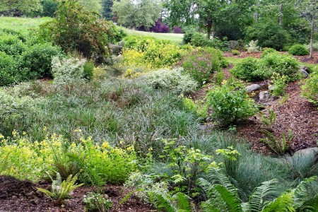 The textures and colors of the summer rain garden