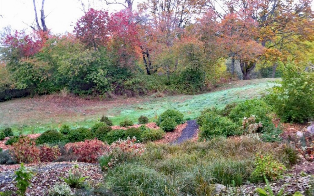 Fall in the Buck Lake Native Plant Garden