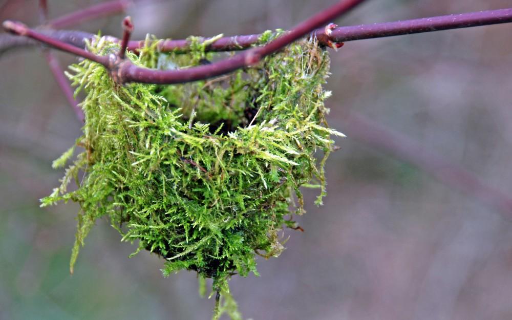 Hummingbird nest in the BLNPG